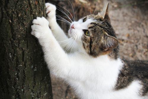 猫が引っかき傷を付けている様子